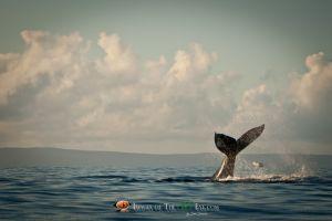 Humpback Whale #1