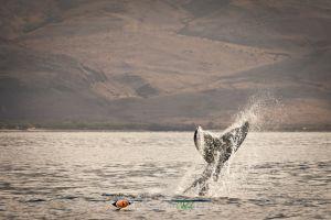 Humpback Whale #2
