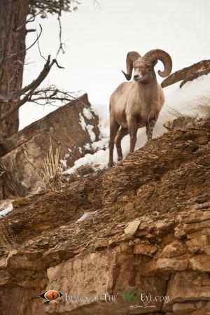 Yellowstone Big Horn 2