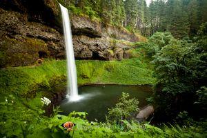 Silver Falls #1